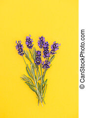 Lavender flowers bouquet yellow background