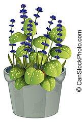Lavender flowers in flowerpot