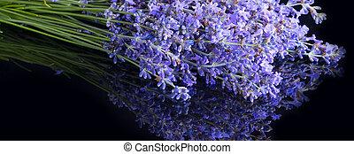 Lavender flowers on black banner background