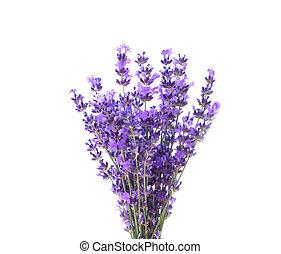 lavender., grupo