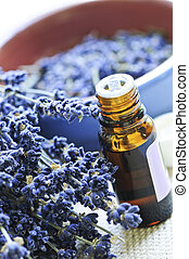 Lavender herb and essential oil - Dried lavender herb and ...