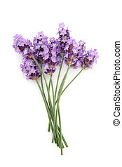 Lavender Herb Flower Posy - Lavender herb flowers isolated...