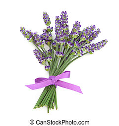 Lavender herb flowers tied with a satin purple bow isolated over white background. Lavandula.
