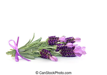 Lavender Herb Flowers - Lavender herb flowers over white...