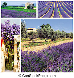 composition of different situation of lavender cuulture in France