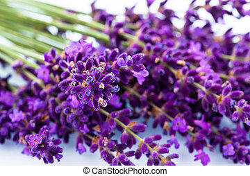 lavender on a white background - lavender flowers isolated ...