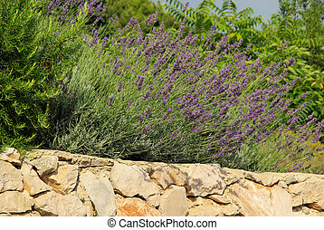 lavender on wall 02