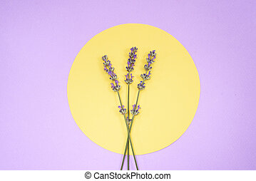Lavender on yellow circle on purple background.