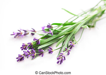 Lavender - Sprigs of lavender isolated on white background