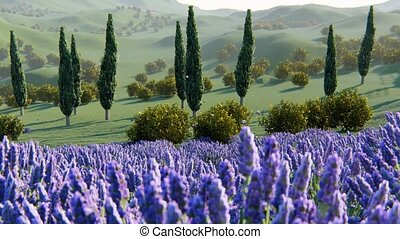 lavender plants in a field at sunset