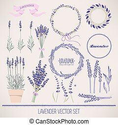Lavender set - Set of lavender flowers and flower...