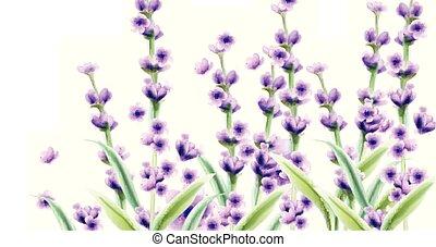 Lavender Vector watercolor card backgrounds. Summer floral bouquets