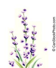Lavender Vector watercolor card isolated Summer floral bouquets