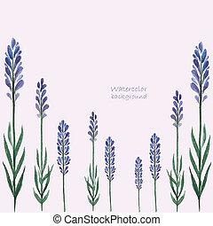 Lavender watercolor. - Vector Illustration of a Lavender ...