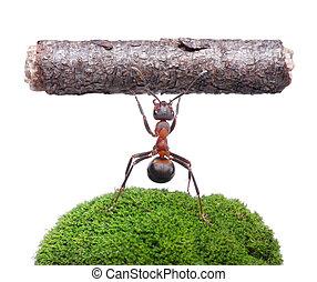 lavoratore, isolato, formica, presa a terra, ceppo, bianco