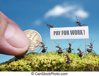 lavoro, pagamento, formiche, richiesta