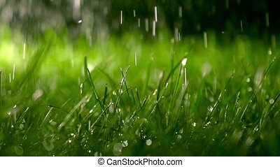Lawn and falling raindrops at night, shallow DOF. Super slow...