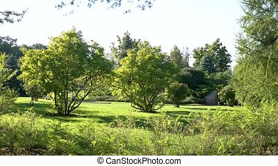 Lawn and trees. Nature and sky, daytime. No stress just...