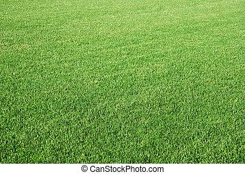Background of perfect short cut green golf grass
