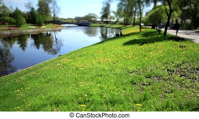 lawn by the river Film Tilt