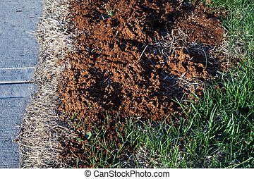 Lawn dead spot  repaired using seeds mixed with mulch