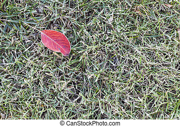 lawn grass covered with frost