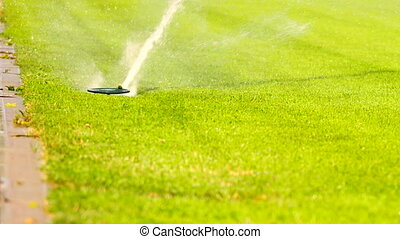 Lawn grass on the football field sprinkles water in summer.  Sprinkler Watering a Sports Field