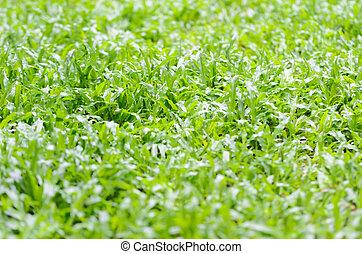 Lawn green bright in the garden