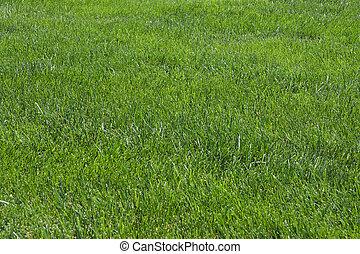 Lawn, green grass, soccer field