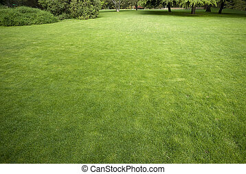 Lawn in a botanical garden with a tree