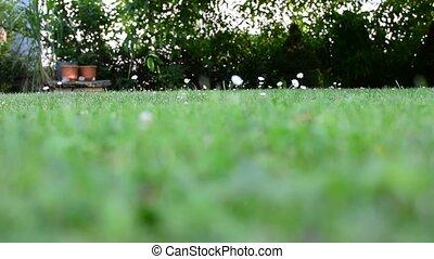 Lawn in garden