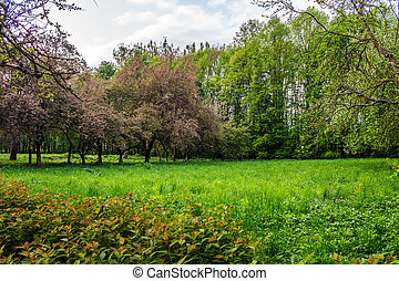 lawn in garden with fruit trees - lawn in the shade of fruit...