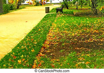 lawn in the park in autumn