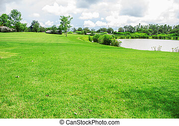 Lawn in the park.