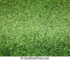 lawn - Lawn golf course green grass background texture...