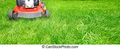 Lawn mower cutting green grass in backyard background