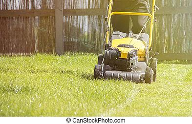 Lawn mower cutting green grass in backyard, garden service.