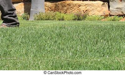 Lawn mower - Gardening Activity - Lawn mower