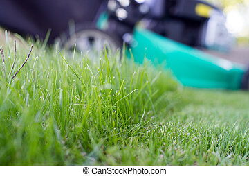 Lawn mowing - green lawn and lawn mower