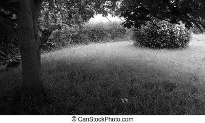 Lawn mowing in timelapse - 4K