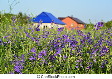 Lawn with wildflowers in front farmhouses - A Lawn with...