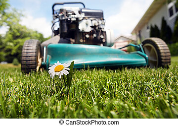 close up of a lawnmower about to cut a flower in the grass