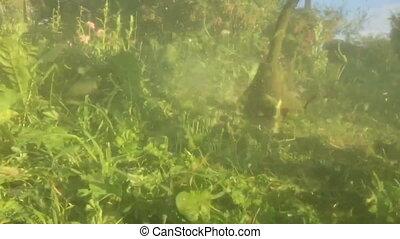 lawnmower, trawa, kośba