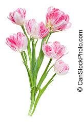lay., fleurs, closeup., arrière-plan rose, sommet plat, sans, vue, bouquet, printemps, air, blanc, tulipes, shadow., isolé, tas