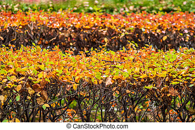 Layers of bushes with yellow, orange and green leaves in the autumn park.