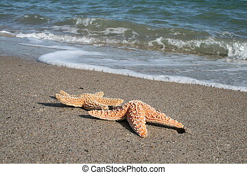 Laying On The Beach - Photograph which emphasises...