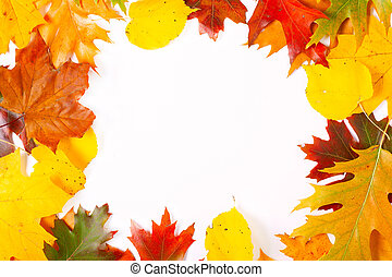 layout ,mockup with colorful autumn leaves on white background