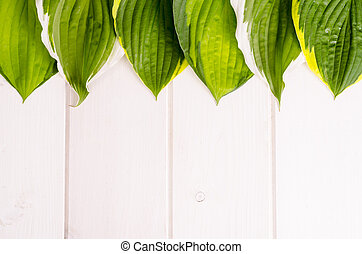 Layout of green leaves on white wooden background, space for text