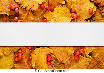 Layout with autumn leaves and berries