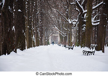 Lazienki Park in winter.